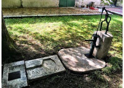 Garden discoveries